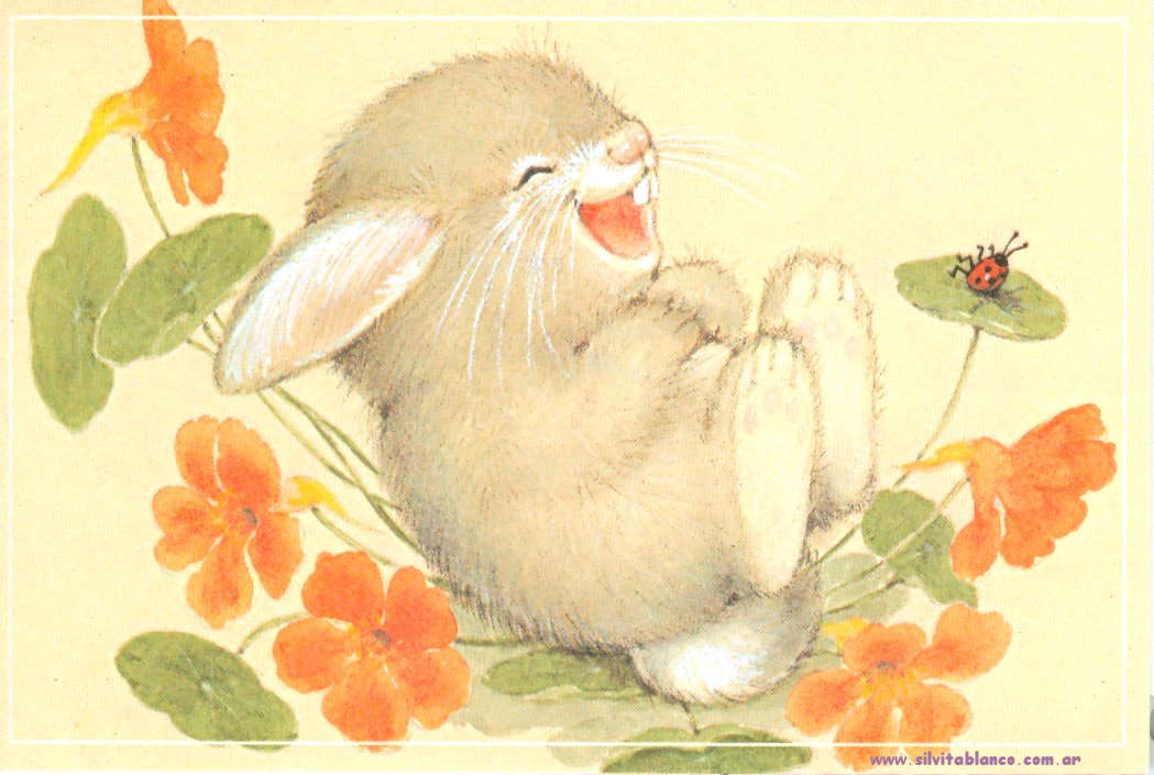 Conejos Dibujos Ilustraciones