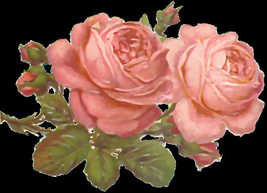 Flores Ilustraciones Png Para Artesania