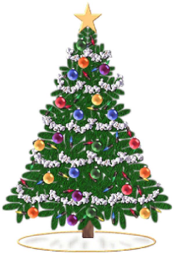 Arboles de navidad arbolitos de navidad pinos de navidad search
