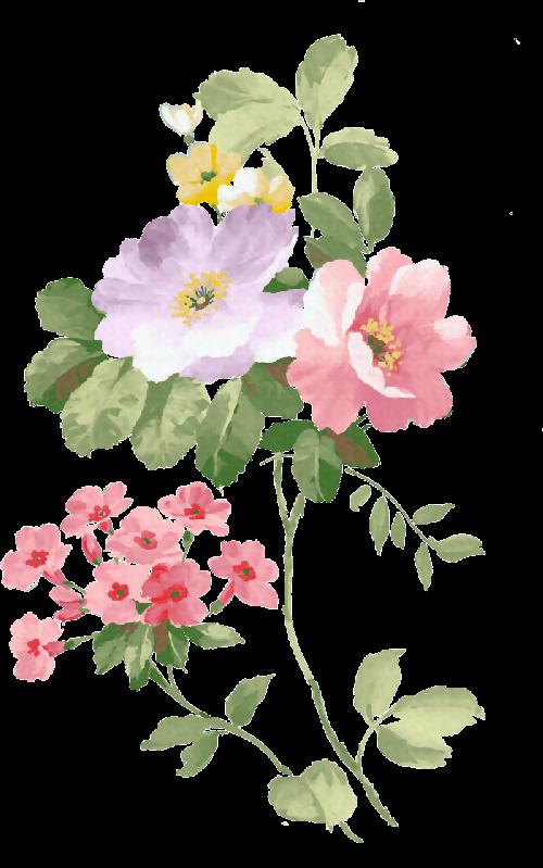 Scrap flores vintage arte para decoraci n ilustraciones - Rosas chinas ...